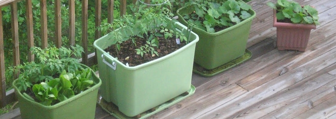 RUBBERMAID CONTAINER GARDEN